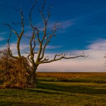 bryan mcsweeny photo of tree